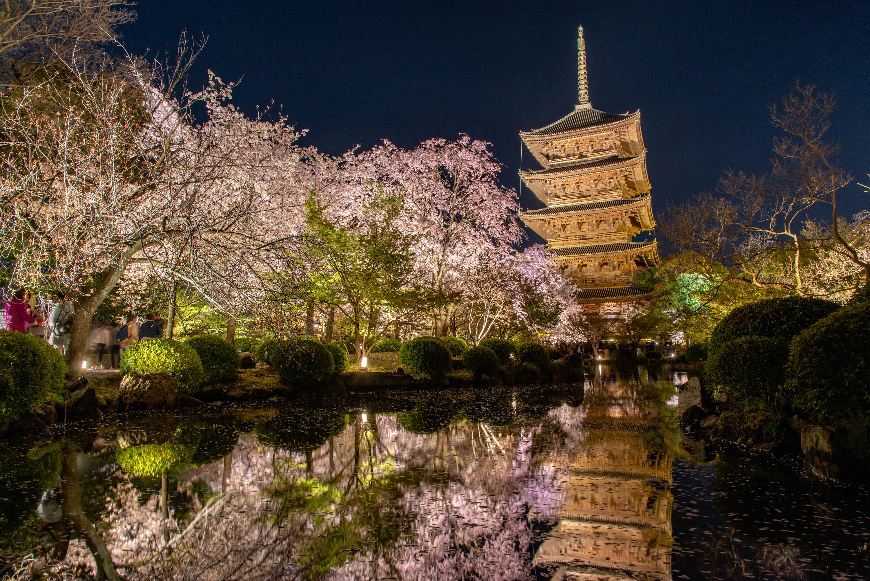 NIKON-CORPORATION_NIKON-D800E_1563999666-1564085922_13747 京都府 東寺(水面に映る五重塔と桜の美しい景色! 京都の春におすすめ桜写真スポット! 撮影した写真の紹介、アクセスや駐車場.ライトアップ.2020年桜の見ごろ予想など)