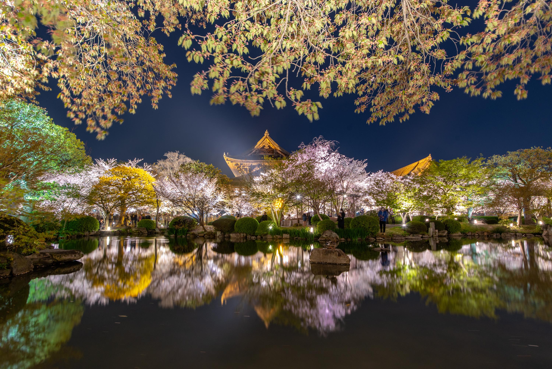NIKON-CORPORATION_NIKON-D800E_1565332658-1565424245_13763 京都府 東寺(水面に映る五重塔と桜の美しい景色! 京都の春におすすめ桜写真スポット! 撮影した写真の紹介、アクセスや駐車場.ライトアップ.2020年桜の見ごろ予想など)