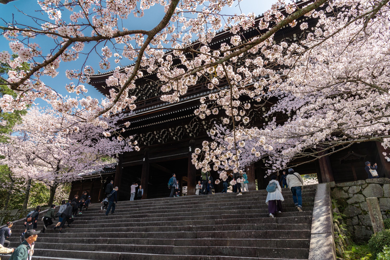 NIKON-CORPORATION_NIKON-D800E_1609847922-1609940602_14124 京都府 知恩院(三門の美しい桜景色! 京都で春におすすめの写真スポット! 撮影した写真の紹介、ライトアップやアクセス.駐車場.開花情報など)