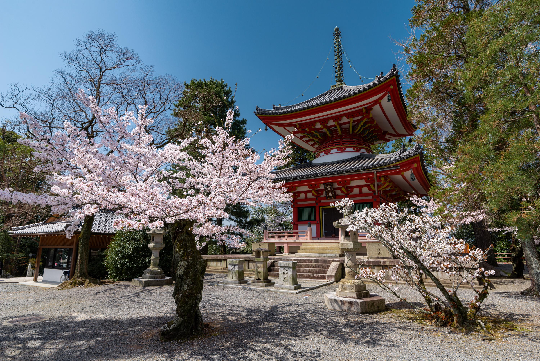 NIKON-CORPORATION_NIKON-D800E_1612063602-1612160209_14148 京都府 知恩院(三門の美しい桜景色! 京都で春におすすめの写真スポット! 撮影した写真の紹介、ライトアップやアクセス.駐車場.開花情報など)