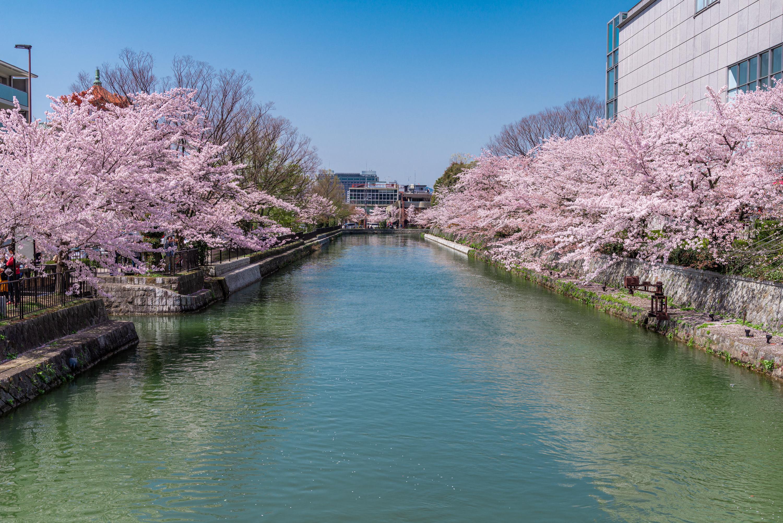 NIKON-CORPORATION_NIKON-D800E_1615652722-1615745369_14186 京都府 岡崎疎水・白川 (川にかかる赤い橋と鳥居の美しい桜景色!京都の春におすすめ桜写真スポット! 撮影した写真の紹介、アクセスや駐車場など)