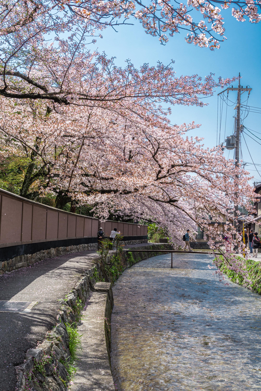 NIKON-CORPORATION_NIKON-D800E_1617748786-1617855328_14207 京都府 岡崎疎水・白川 (川にかかる赤い橋と鳥居の美しい桜景色!京都の春におすすめ桜写真スポット! 撮影した写真の紹介、アクセスや駐車場など)