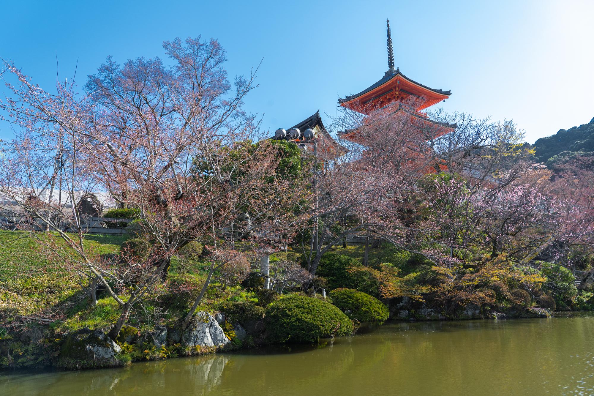 SONY_ILCE-7M3_1267651762-1267701407_174 京都府 清水寺(2020年 清水寺の桜景色と春におすすめの写真スポット. 見どころやライトアップ、アクセス、工事状況、桜の見頃情報まとめ)