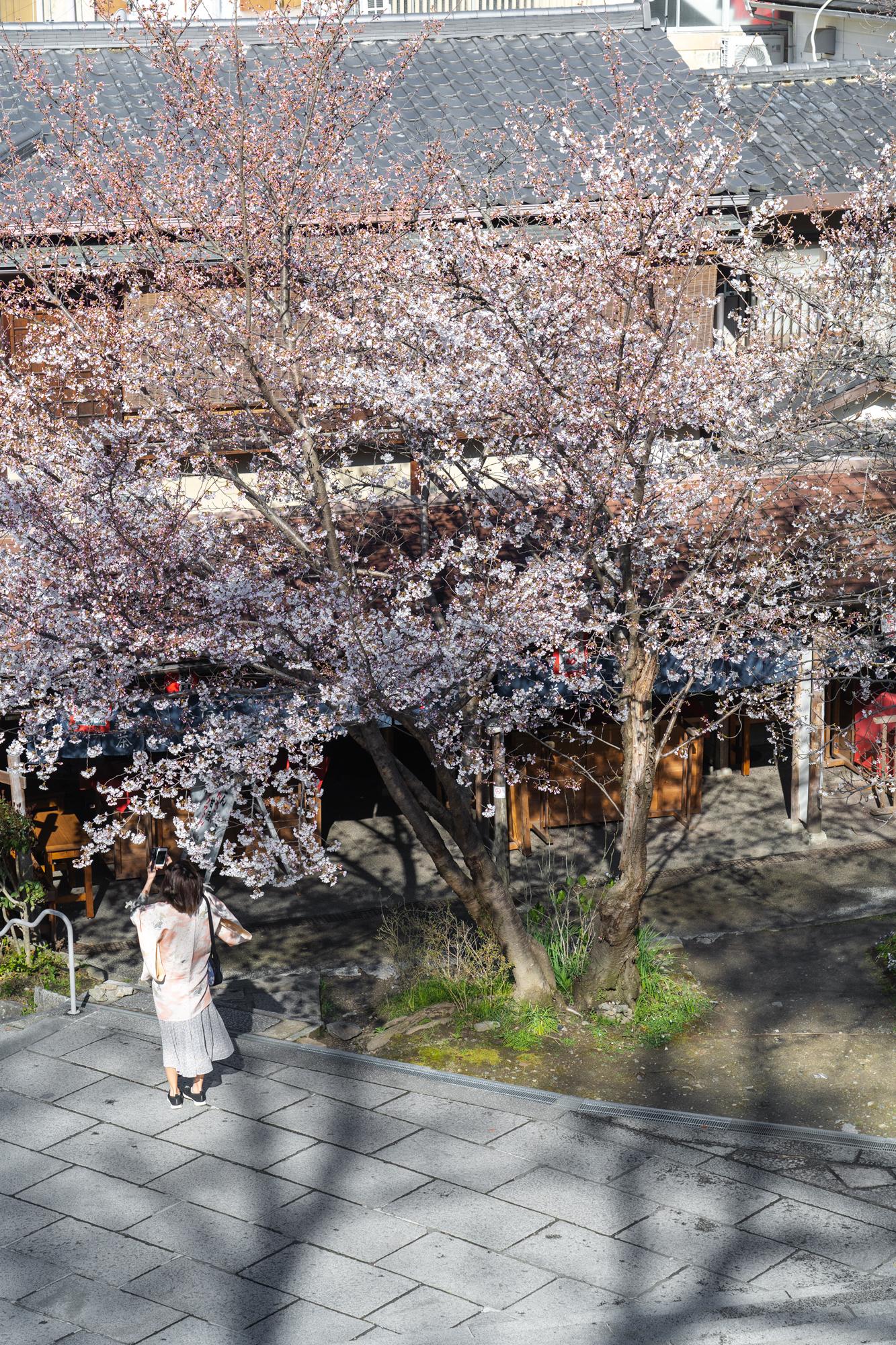 SONY_ILCE-7M3_1365399474-1365449759_181 京都府 清水寺(2020年 清水寺の桜景色と春におすすめの写真スポット. 見どころやライトアップ、アクセス、工事状況、桜の見頃情報まとめ)