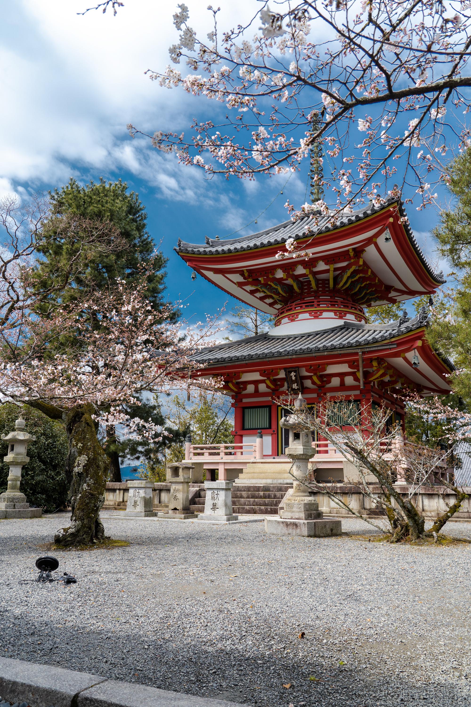 SONY_ILCE-7M3_2755038194-2755088119_1166 京都府 知恩院(三門の美しい桜景色! 京都で春におすすめの写真スポット! 撮影した写真の紹介、ライトアップやアクセス.駐車場.開花情報など)