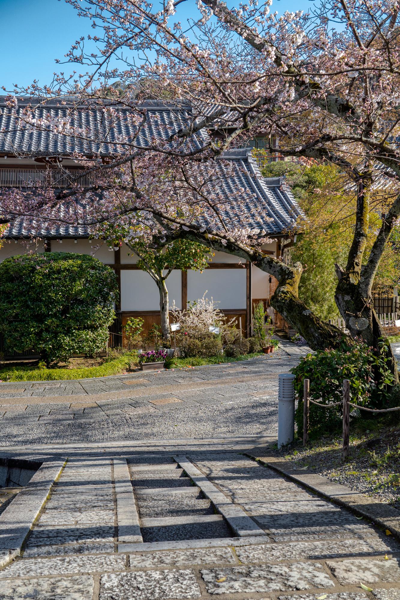 SONY_ILCE-7M3_3283485170-3283535207_2213 京都府 清水寺(2020年 清水寺の桜景色と春におすすめの写真スポット. 見どころやライトアップ、アクセス、工事状況、桜の見頃情報まとめ)