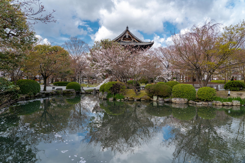 SONY_ILCE-7M3_3517660850-3517710375_3210 京都府 東寺(水面に映る五重塔と桜の美しい景色! 京都の春におすすめ桜写真スポット! 撮影した写真の紹介、アクセスや駐車場.ライトアップ.2020年桜の見ごろ予想など)