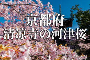 b7594cf4baa7c899cbdb73e8f679faee-2-300x200 京都以外ブログアイキャッチ用