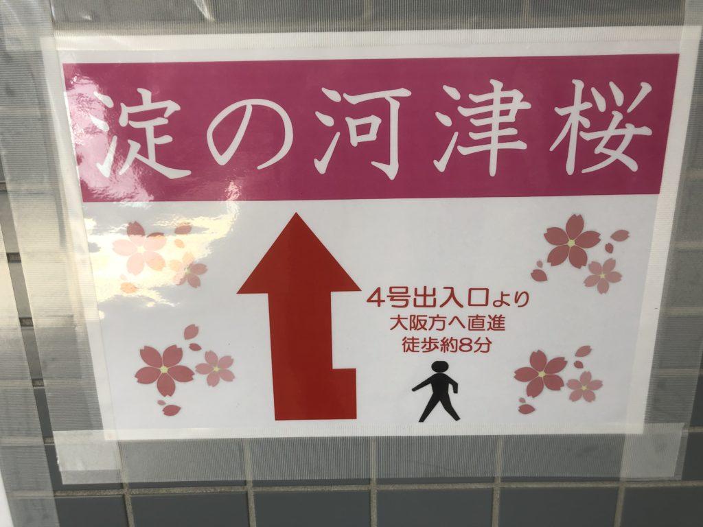 fbf7e347f2e187339e4a9d194a1b9f0d-1024x768 京都府 淀水路の河津桜(京都でいち早く桜が満開になるおすすめの河津桜写真スポット! アクセス方法や駐車場、2020年桜の開花状況など)