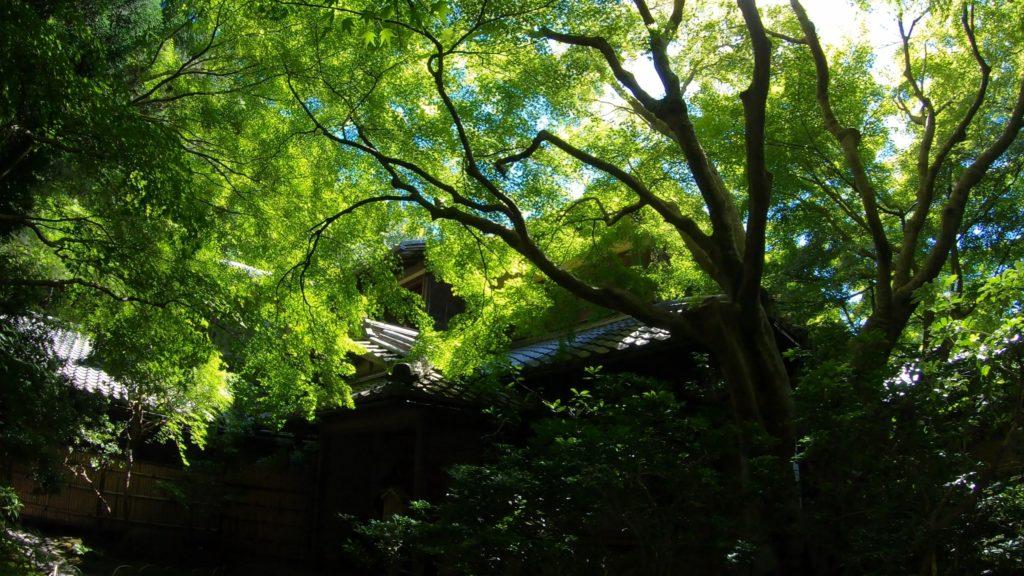 081007e6bbdad01e9ae24a4edfbda958-1024x576 京都  瑠璃光院 ( 京都の夏、新緑のおすすめ写真スポット・アクセス情報や撮影ポイントなど!)