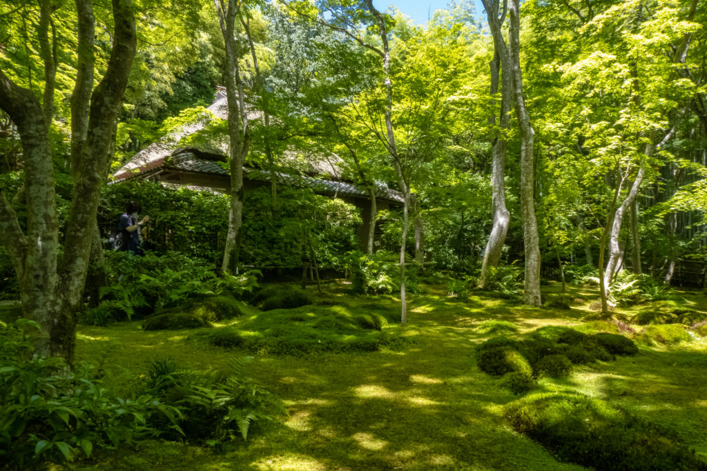 P1000100-1024x683 京都府 祇王寺 (新緑に染まる青もみじと床一面の苔の美しい景色!京都の初夏、梅雨の時期におすすめの写真スポット! 撮影した写真の紹介、アクセスや見どころなど)