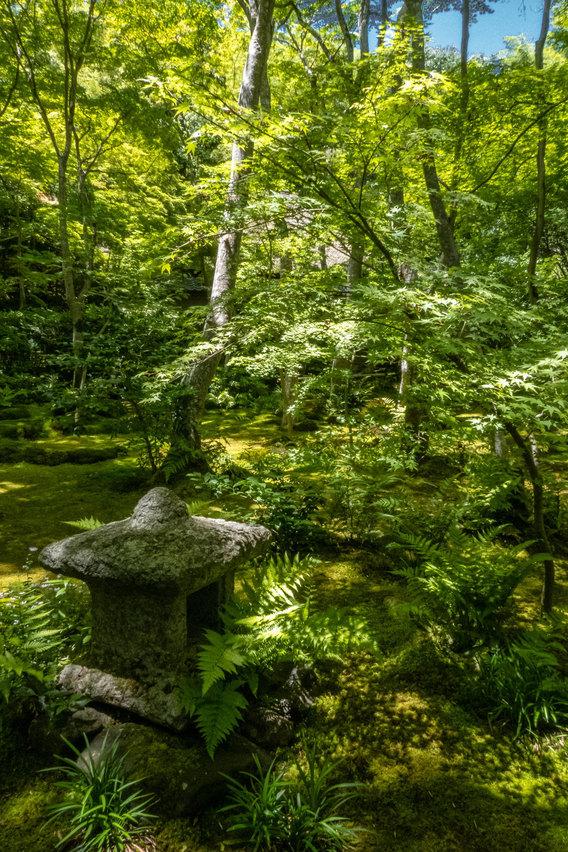 P1000102 京都府 祇王寺 (新緑に染まる青もみじと床一面の苔の美しい景色!京都の初夏、梅雨の時期におすすめの写真スポット! 撮影した写真の紹介、アクセスや見どころなど)