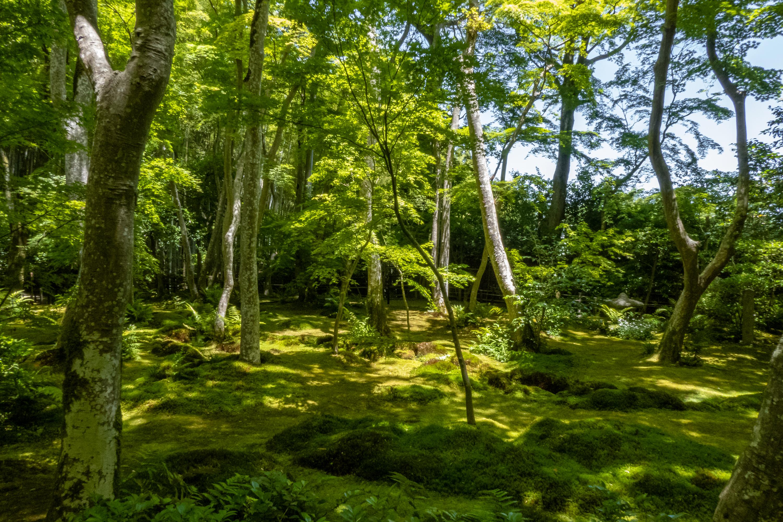 P1000112-2 京都府 祇王寺 (新緑に染まる青もみじと床一面の苔の美しい景色!京都の初夏、梅雨の時期におすすめの写真スポット! 撮影した写真の紹介、アクセスや見どころなど)