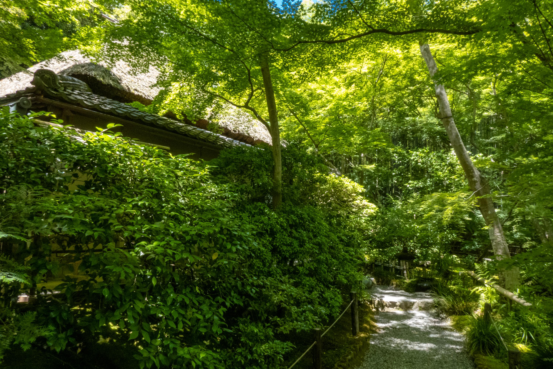 P1000115 京都府 祇王寺 (新緑に染まる青もみじと床一面の苔の美しい景色!京都の初夏、梅雨の時期におすすめの写真スポット! 撮影した写真の紹介、アクセスや見どころなど)
