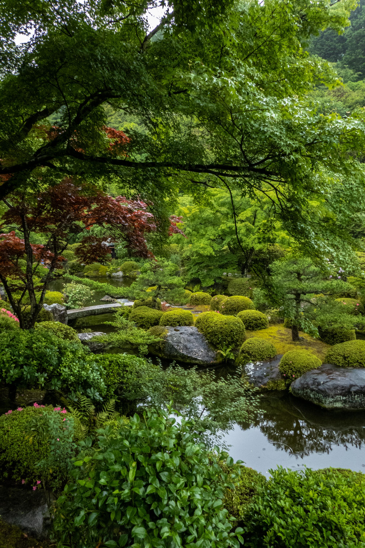 P1000467 京都府 三室戸寺 (1万株のアジサイが咲き誇る京都随一の名所! 初夏、梅雨の時期におすすめの写真スポット! 撮影した写真の紹介、アクセスやライトアップ情報など)