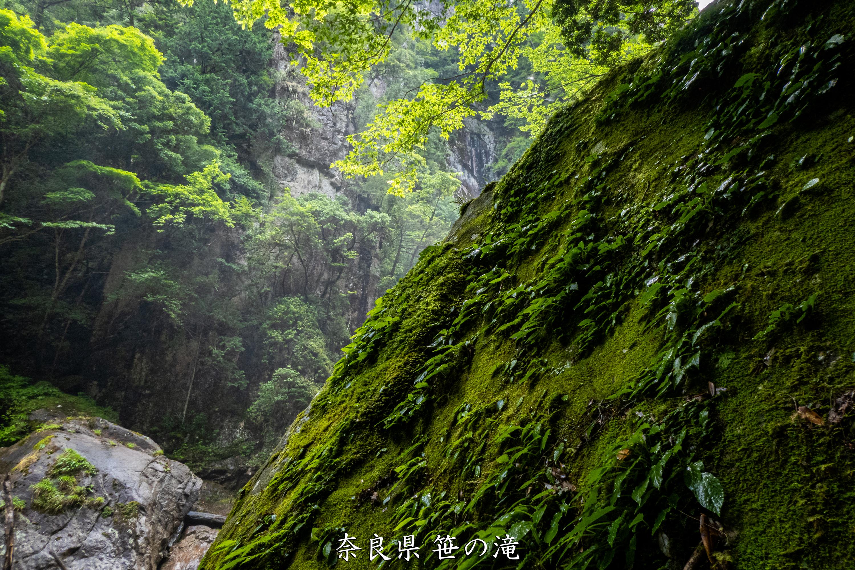 P1001034 奈良県 笹の滝 (十津川村の奥にある秘境の滝! 奈良の夏におすすめ写真撮影スポット! 写真の紹介、アクセス情報など)