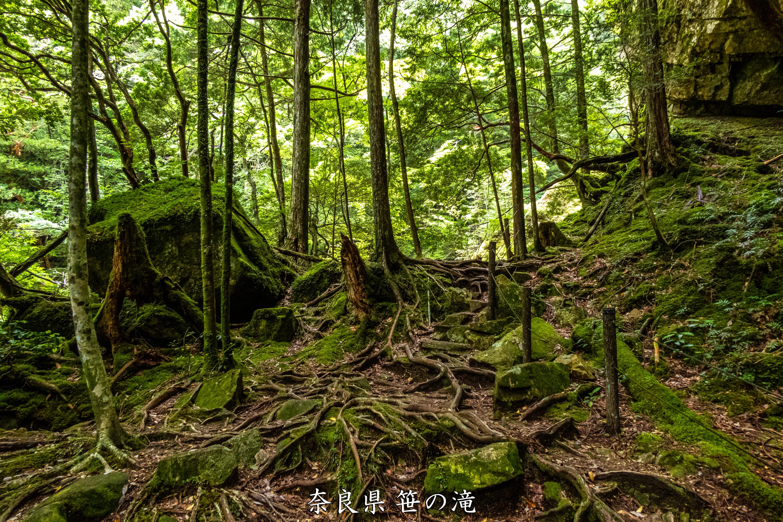 P1001063 奈良県 笹の滝 (十津川村の奥にある秘境の滝! 奈良の夏におすすめ写真撮影スポット! 写真の紹介、アクセス情報など)
