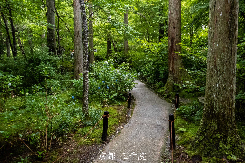 P1001436 京都府 三千院 (青もみじと苔の新緑が美しい庭園.  初夏、梅雨の時期におすすめの写真スポット!撮影した写真の紹介、アクセス情報など)