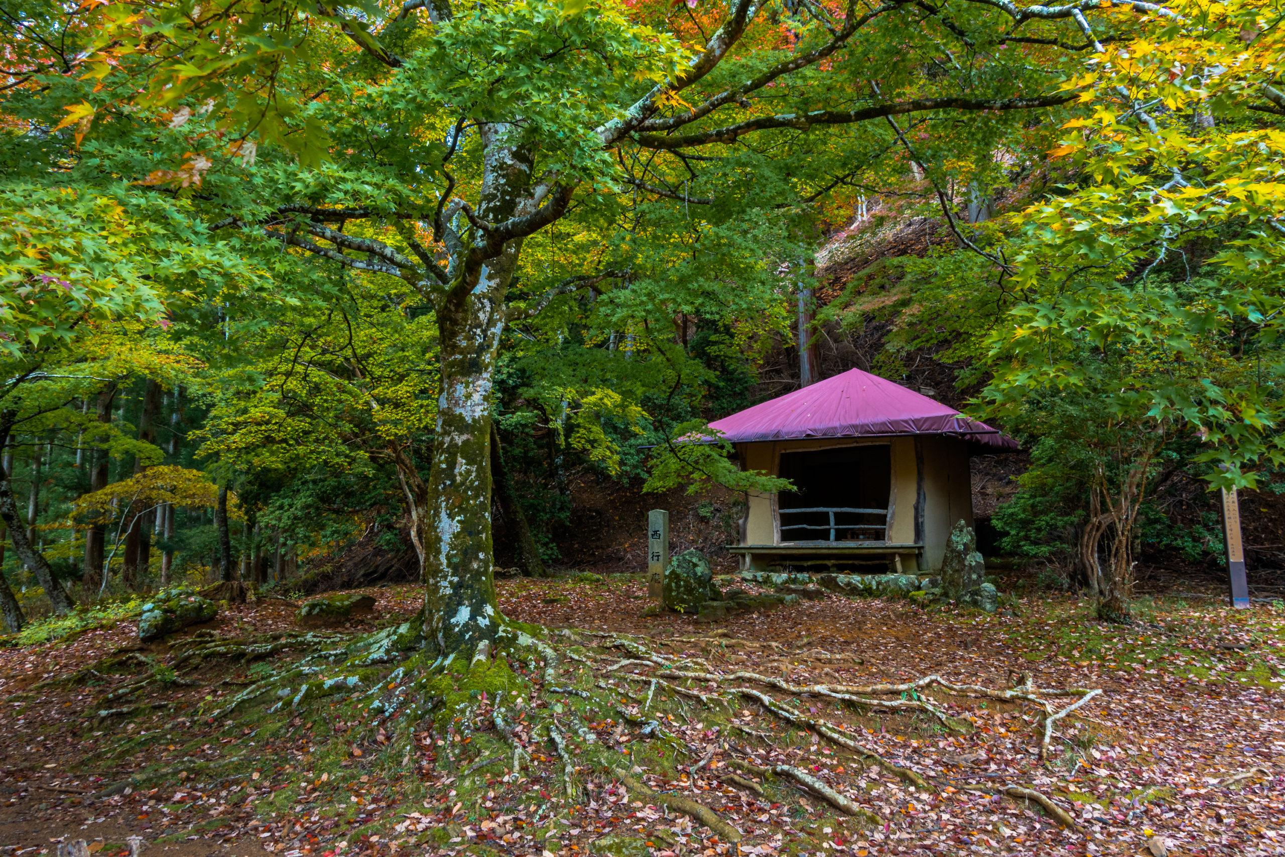DSC00041-scaled 奈良県  吉野山(山が紅葉に染まる秋におすすめの絶景スポット! 撮影した写真の紹介、アクセス情報や駐車場情報など)