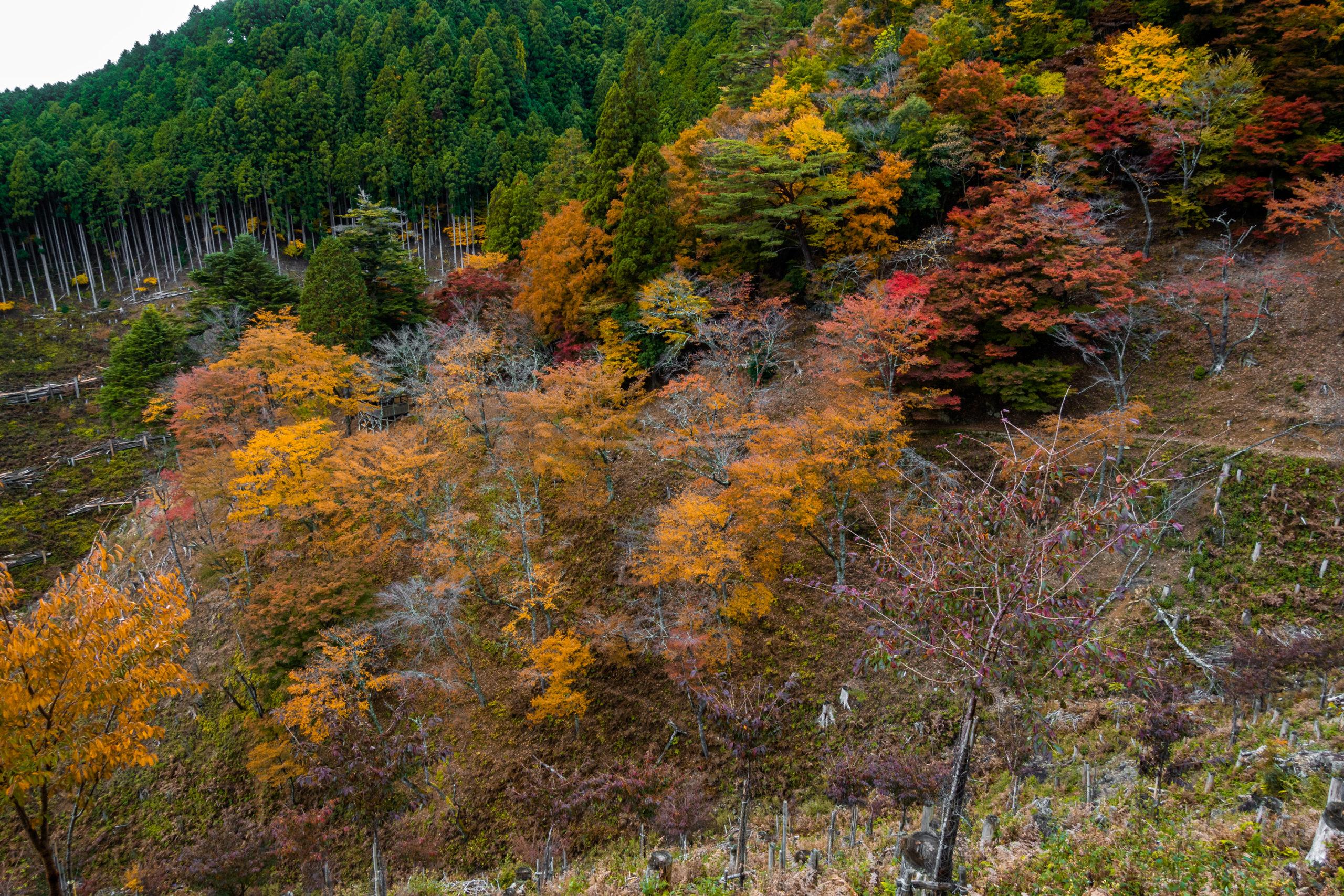 DSC00057-scaled 奈良県  吉野山(山が紅葉に染まる秋におすすめの絶景スポット! 撮影した写真の紹介、アクセス情報や駐車場情報など)