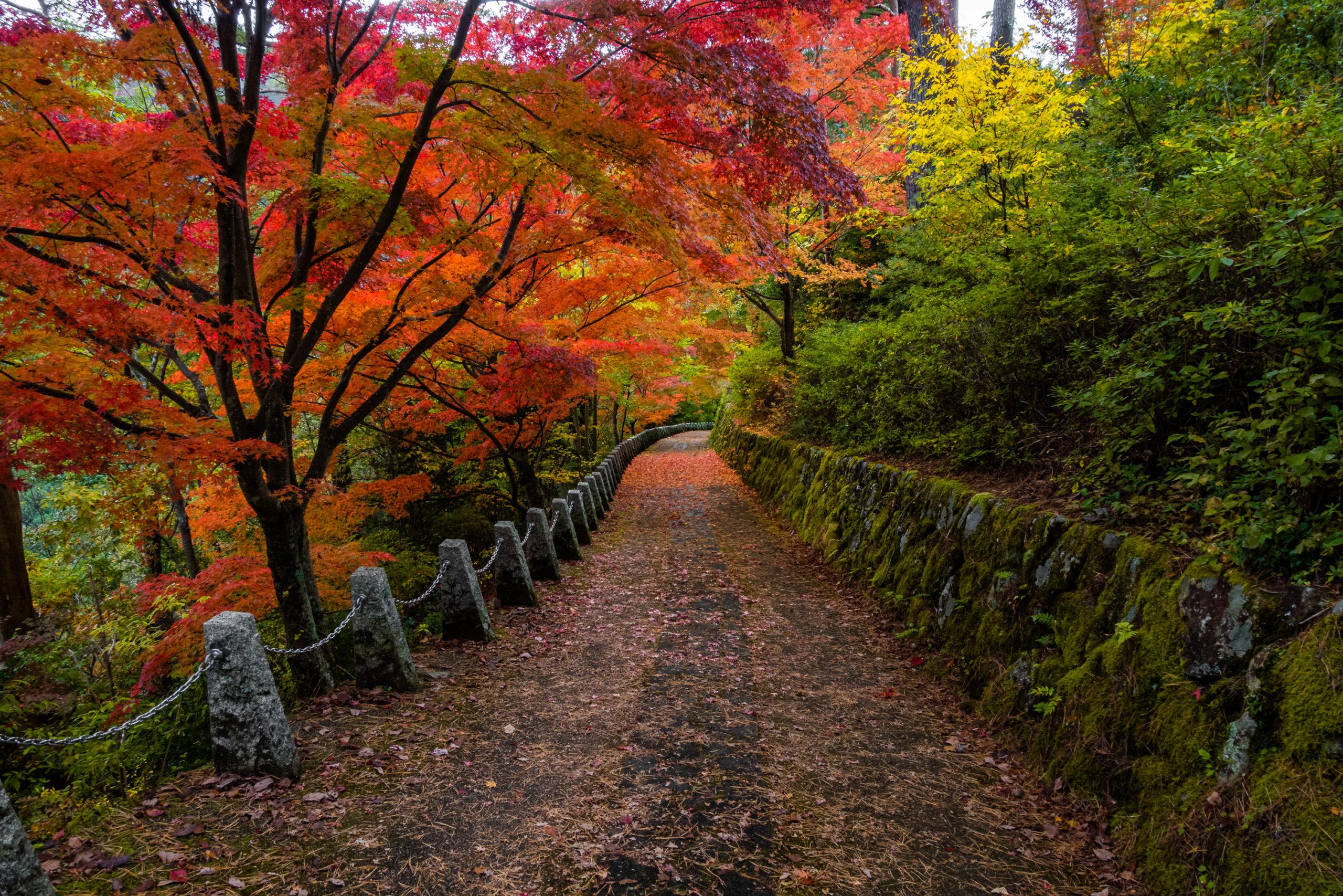 DSC00067-scaled 奈良県  吉野山(山が紅葉に染まる秋におすすめの絶景スポット! 撮影した写真の紹介、アクセス情報や駐車場情報など)