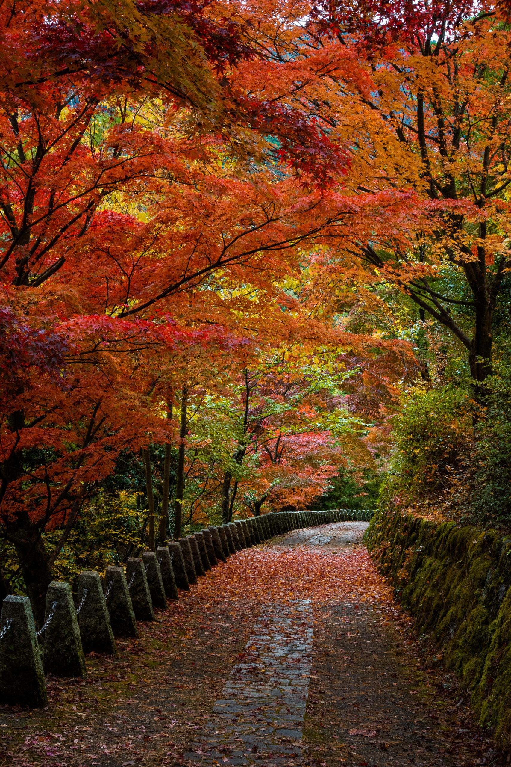 DSC00075-scaled 奈良県  吉野山(山が紅葉に染まる秋におすすめの絶景スポット! 撮影した写真の紹介、アクセス情報や駐車場情報など)