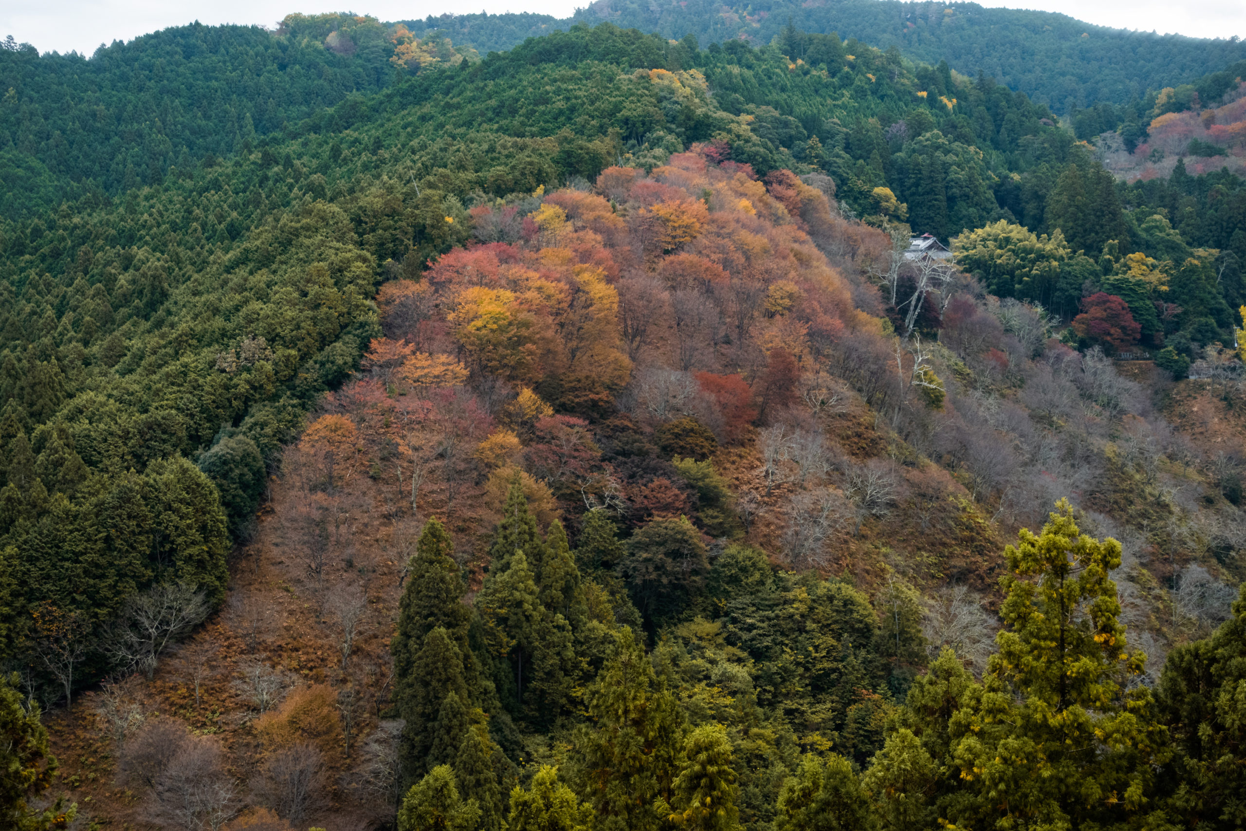 DSC00107-scaled 奈良県  吉野山(山が紅葉に染まる秋におすすめの絶景スポット! 撮影した写真の紹介、アクセス情報や駐車場情報など)