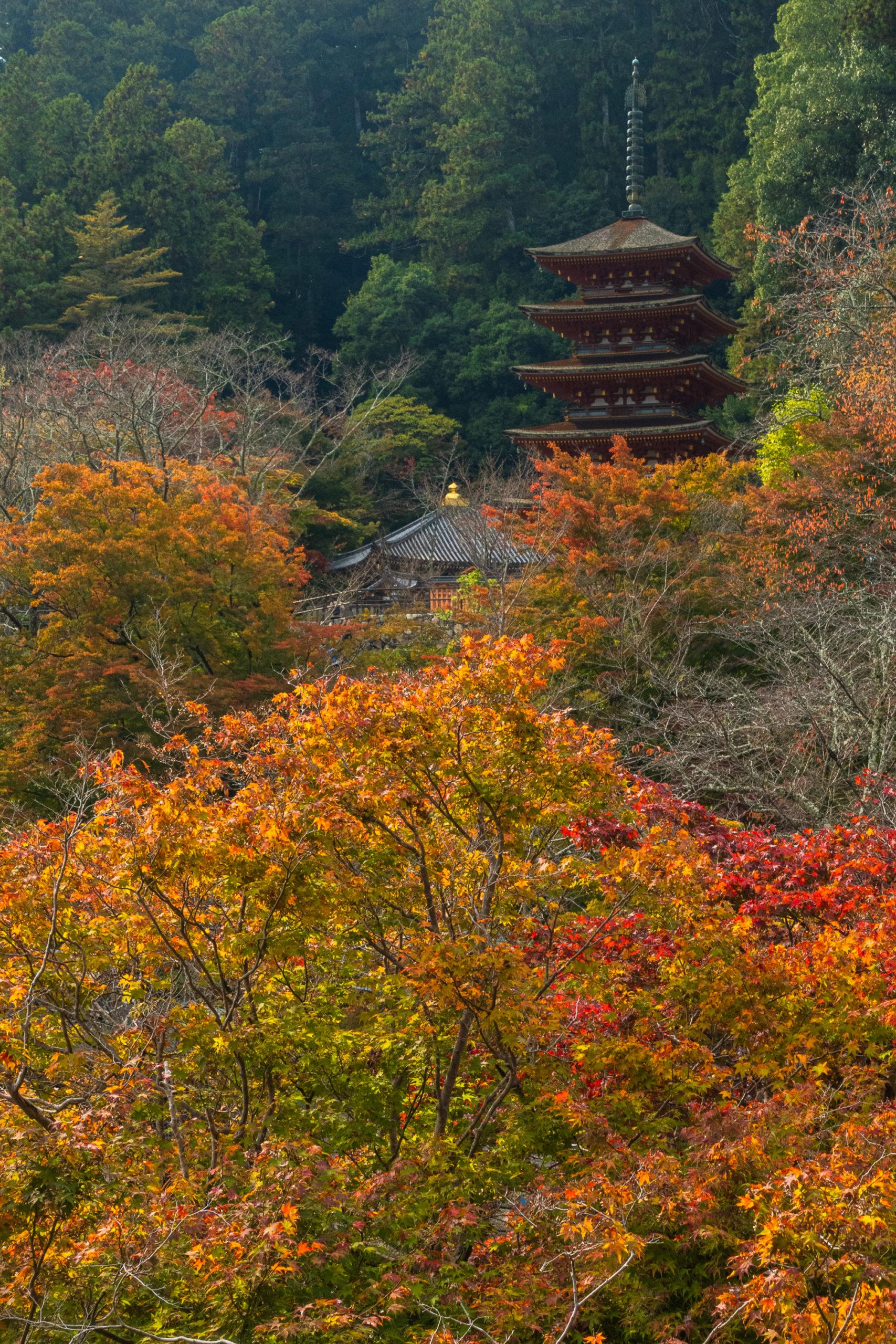DSC00318-scaled 奈良県  長谷寺(風情を感じる五重塔と紅葉景色が美しい秋のおすすめスポット! 撮影した写真の紹介、アクセス情報や駐車場情報など)