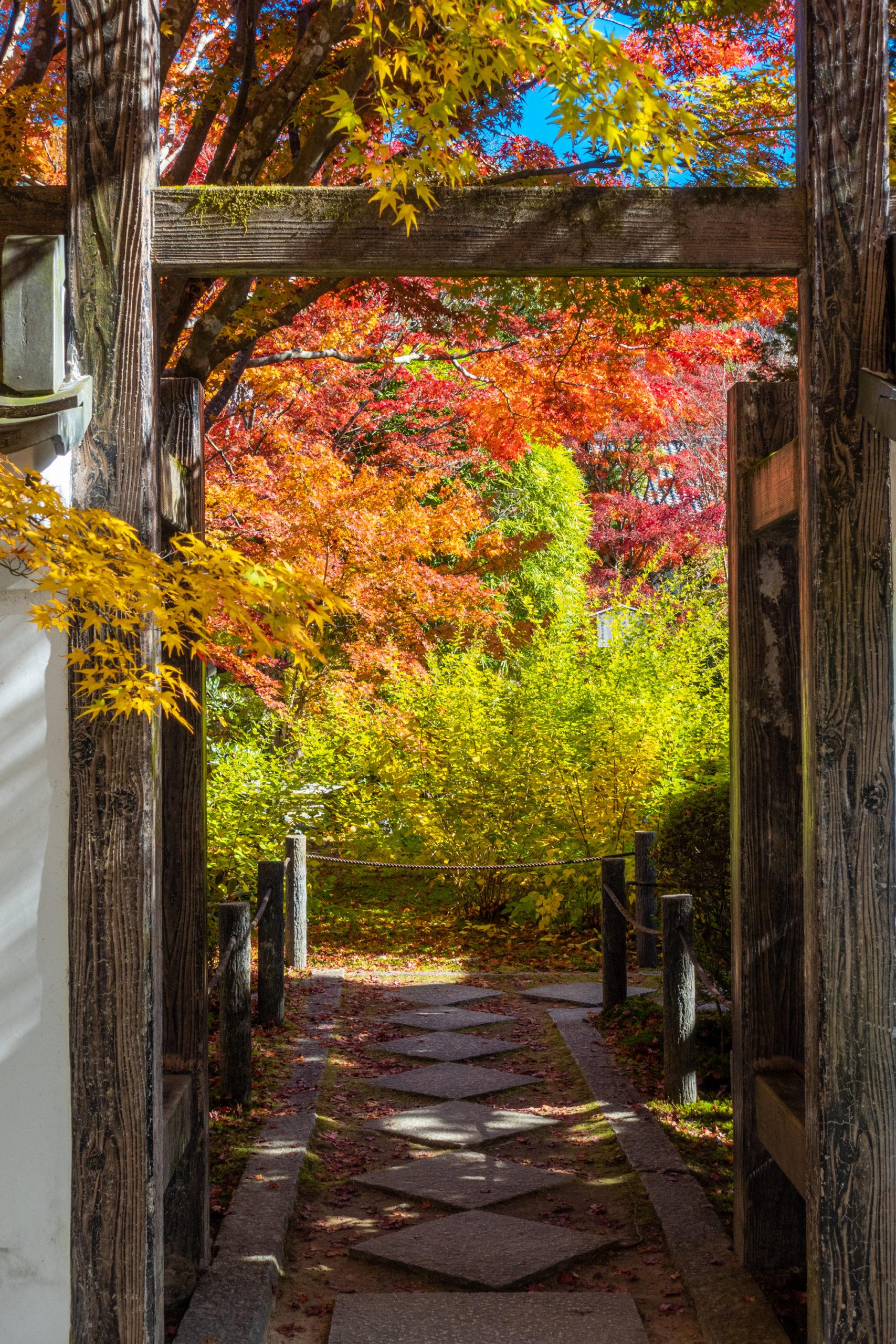 DSC00604-scaled 京都  天授庵(紅葉の美しい庭園が見所な秋におすすめのスポット!撮影した写真の紹介、アクセス情報など)