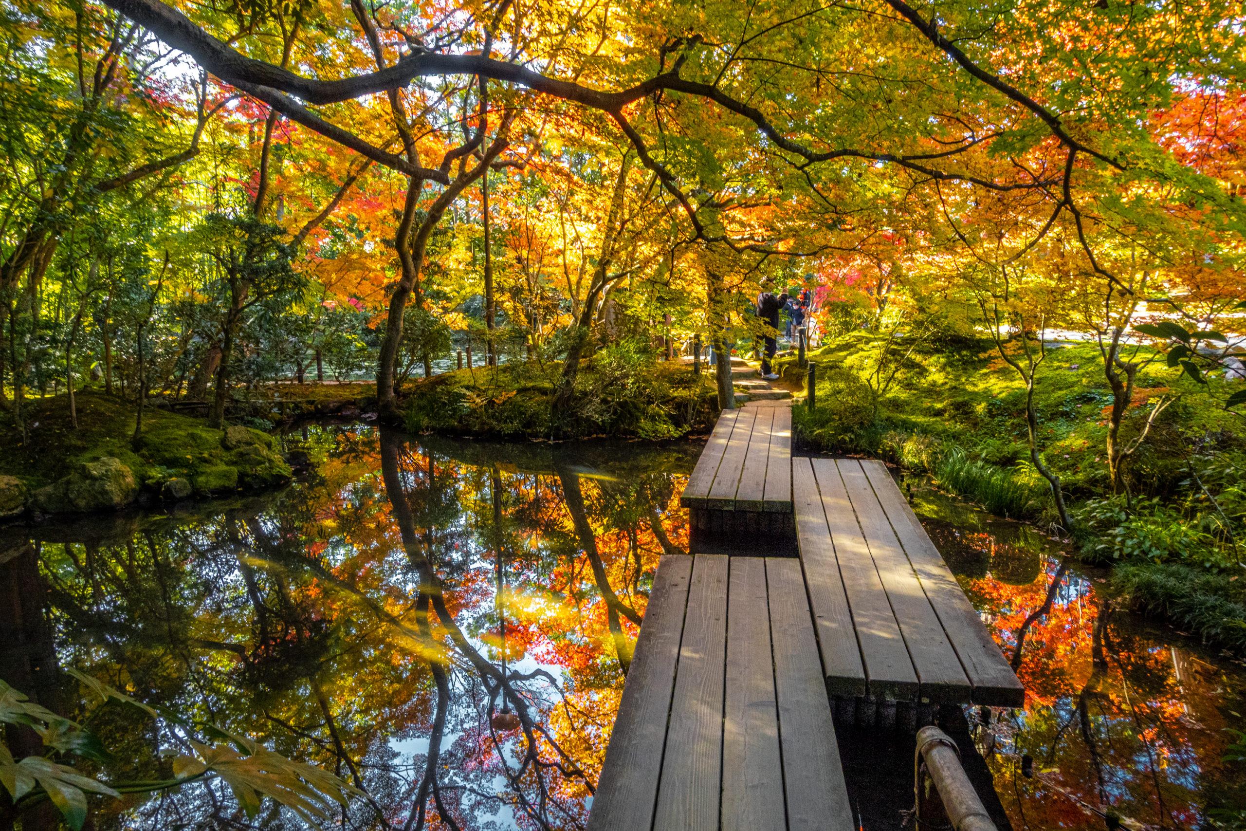 DSC00629-scaled 京都  天授庵(紅葉の美しい庭園が見所な秋におすすめのスポット!撮影した写真の紹介、アクセス情報など)
