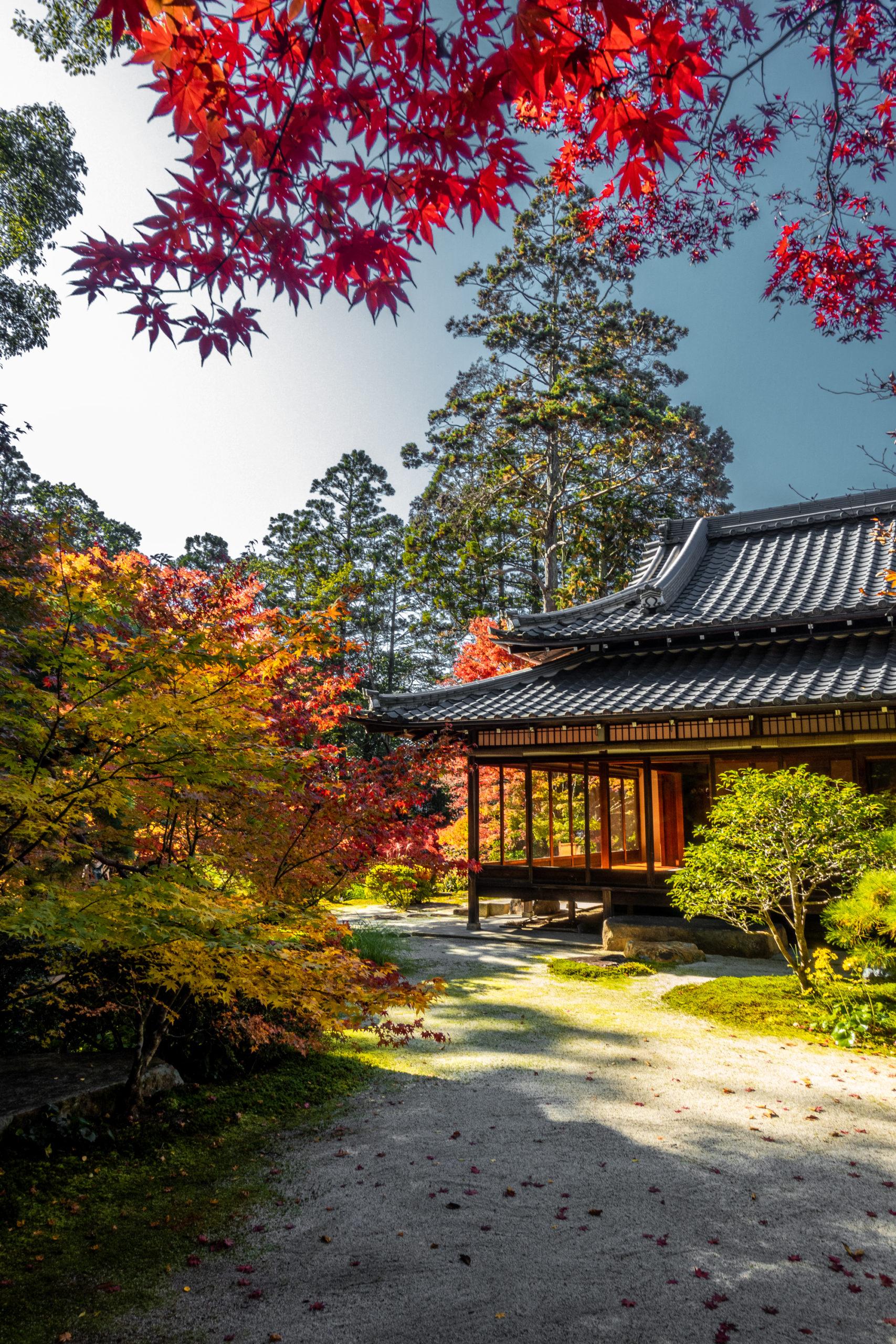 DSC00632-scaled 京都  天授庵(紅葉の美しい庭園が見所な秋におすすめのスポット!撮影した写真の紹介、アクセス情報など)