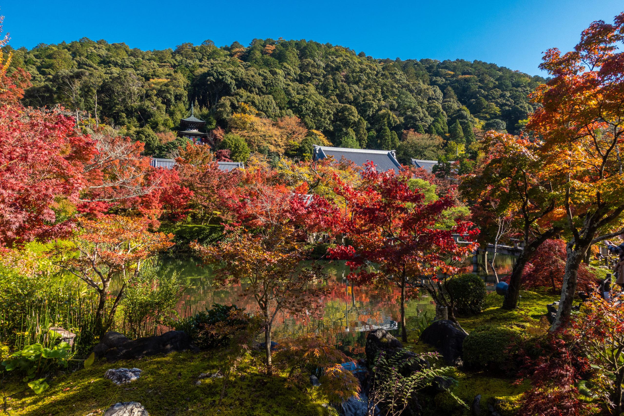 DSC00704-scaled 京都  永観堂-禅林寺(池に映る紅葉の風景が美しい秋におすすめのスポット!撮影した写真の紹介、アクセス情報・ライトアップ情報など)