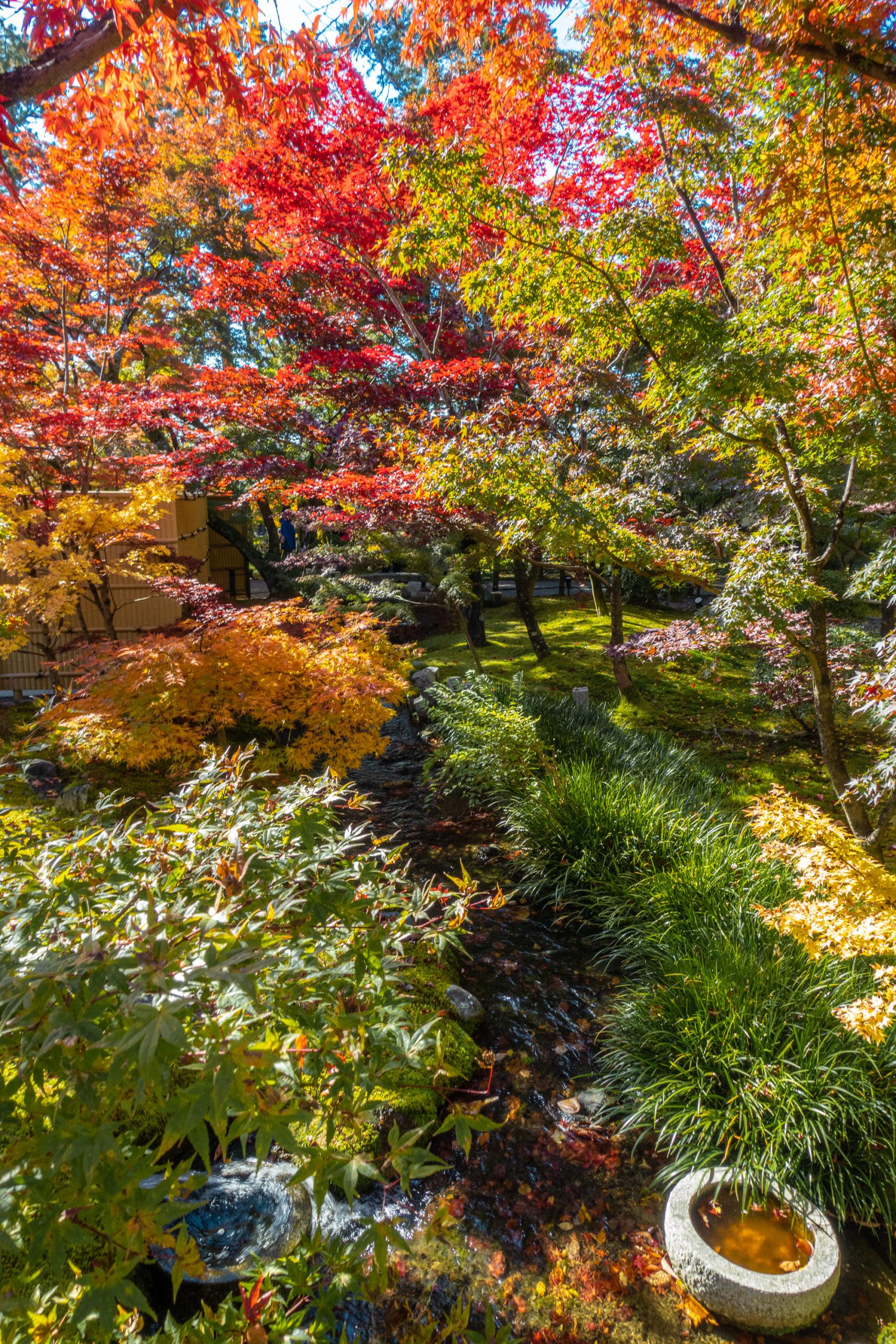 DSC00708-scaled 京都  永観堂-禅林寺(池に映る紅葉の風景が美しい秋におすすめのスポット!撮影した写真の紹介、アクセス情報・ライトアップ情報など)