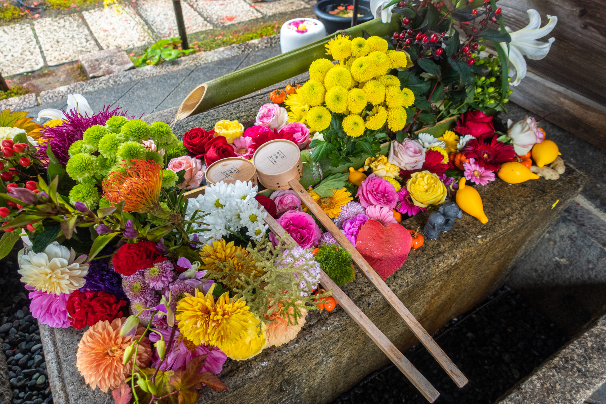 DSC00887-scaled 京都  勝林寺(紅葉と和傘の風情を感じる景色が美しい秋におすすめのスポット!撮影した写真の紹介、アクセス情報など)
