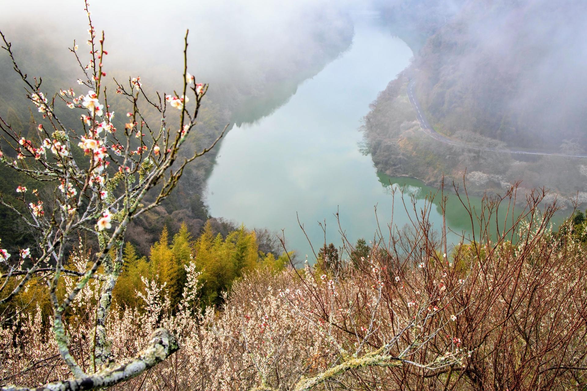 2340564_m 奈良県  月ヶ瀬梅林(約1万本の梅が咲く春におすすめの絶景スポット!雲海も見所! 写真の紹介、アクセス情報や駐車場情報など)