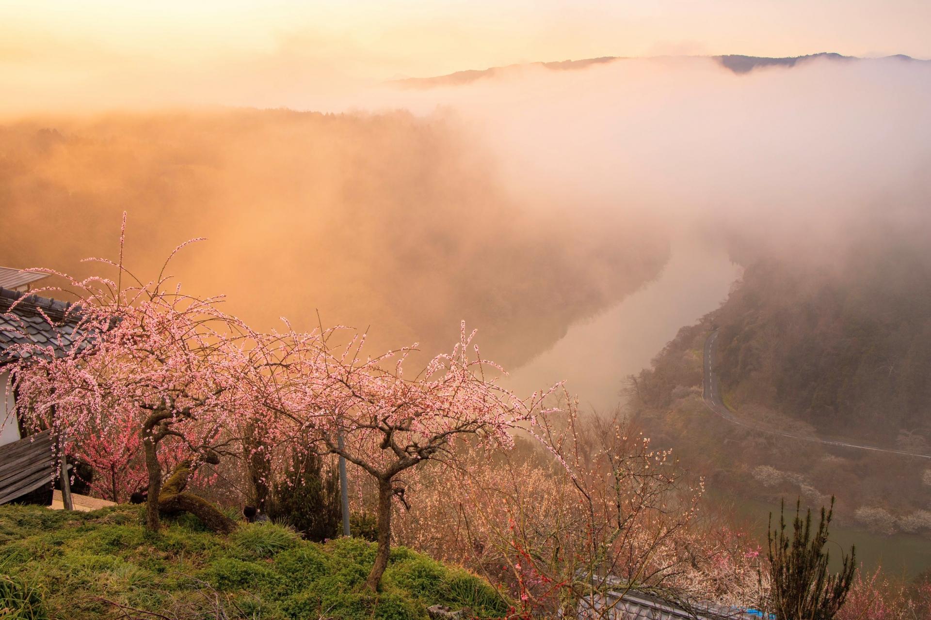2345057_m 奈良県  月ヶ瀬梅林(約1万本の梅が咲く春におすすめの絶景スポット!雲海も見所! 写真の紹介、アクセス情報や駐車場情報など)