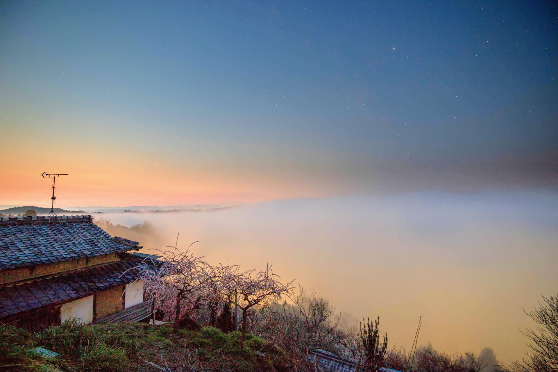 2347150_m 奈良県  月ヶ瀬梅林(約1万本の梅が咲く春におすすめの絶景スポット!雲海も見所! 写真の紹介、アクセス情報や駐車場情報など)