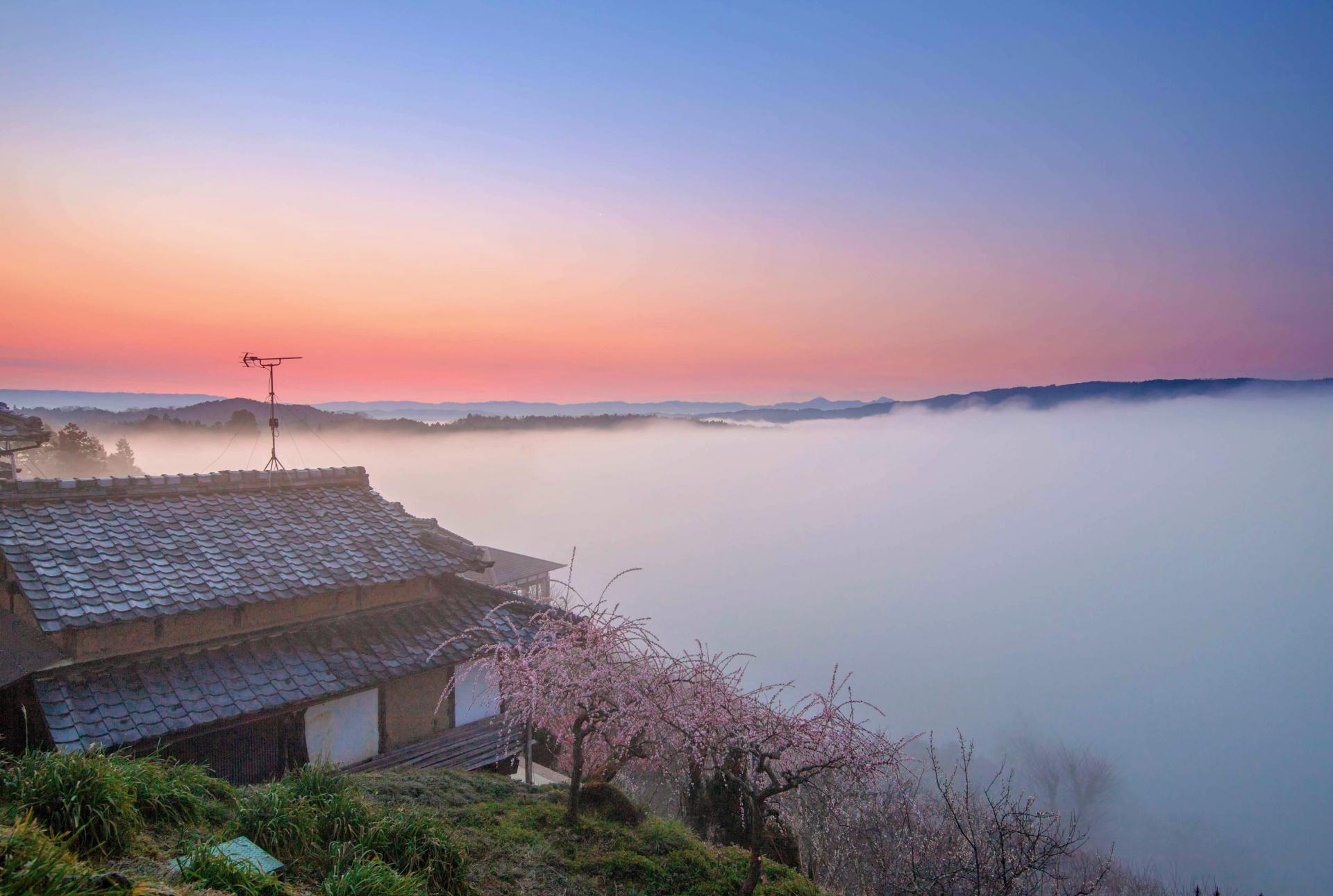 2347151_m 奈良県  月ヶ瀬梅林(約1万本の梅が咲く春におすすめの絶景スポット!雲海も見所! 写真の紹介、アクセス情報や駐車場情報など)