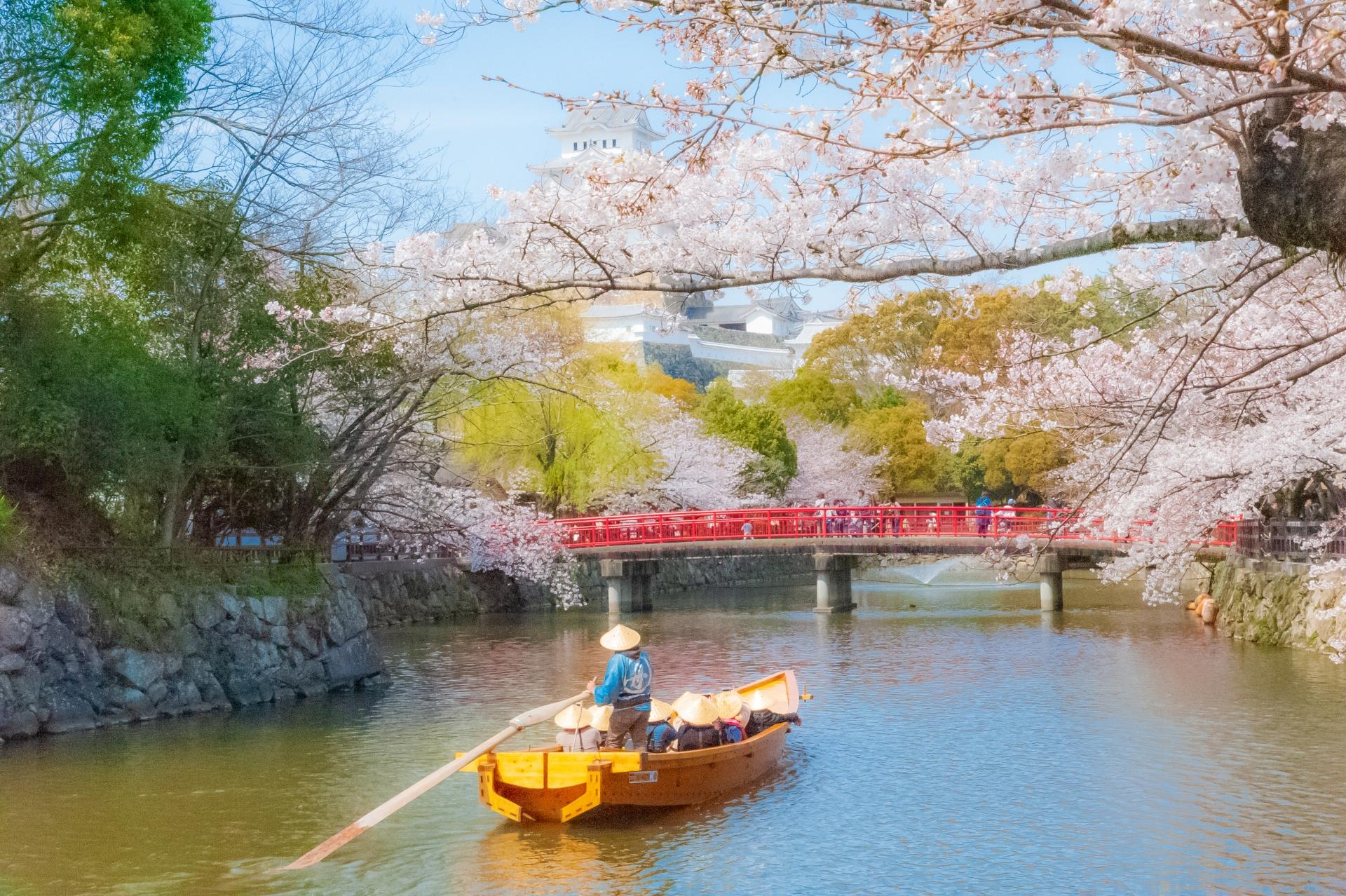 2422808_m 兵庫県  姫路城(桜と城の景色が美しい春におすすめのスポット! 写真の紹介、アクセス情報や駐車場情報など)