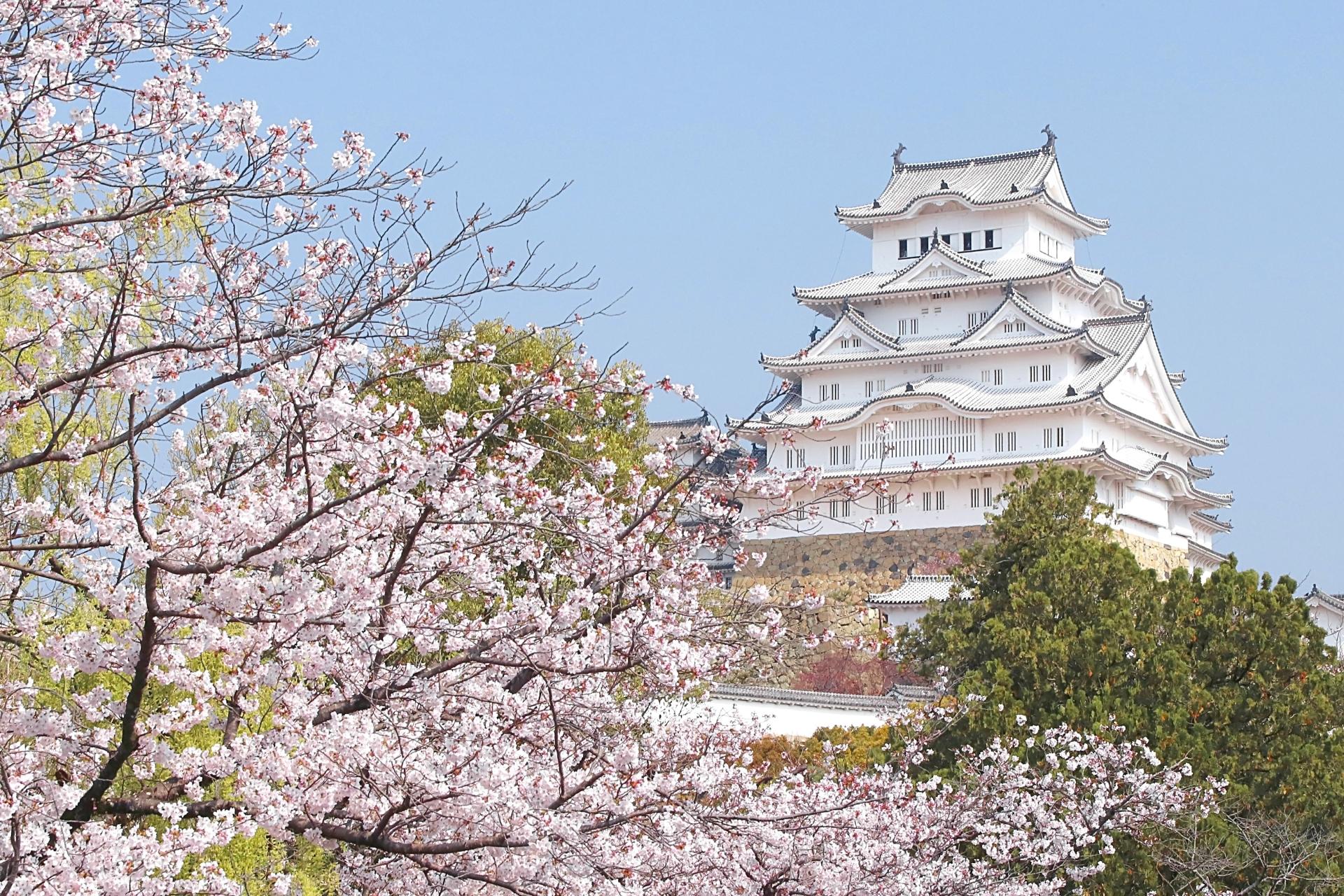 3184977_m 兵庫県  姫路城(桜と城の景色が美しい春におすすめのスポット! 写真の紹介、アクセス情報や駐車場情報など)