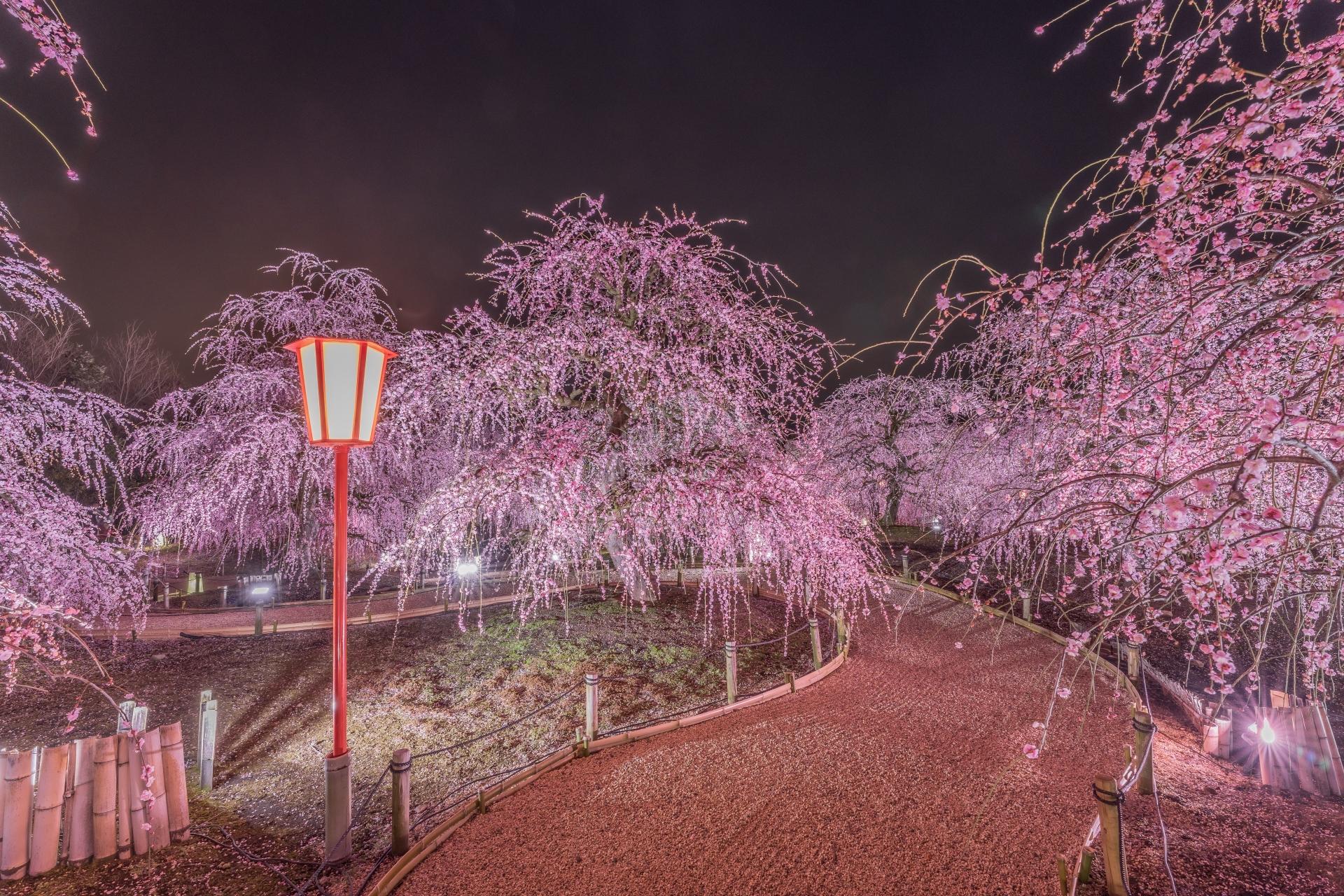 3269826_m 三重県  鈴鹿の森庭園(鈴鹿山脈を背景に彩る梅の絶景スポット! 夜間のライトアップも開催! 写真の紹介、アクセス情報や駐車場情報など)