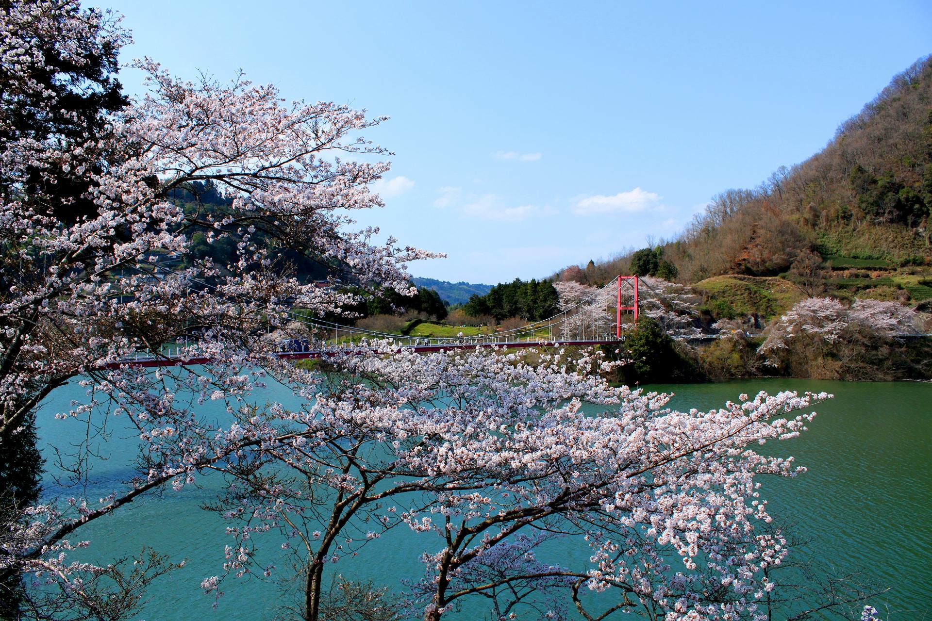 3271749_m 奈良県  月ヶ瀬梅林(約1万本の梅が咲く春におすすめの絶景スポット!雲海も見所! 写真の紹介、アクセス情報や駐車場情報など)