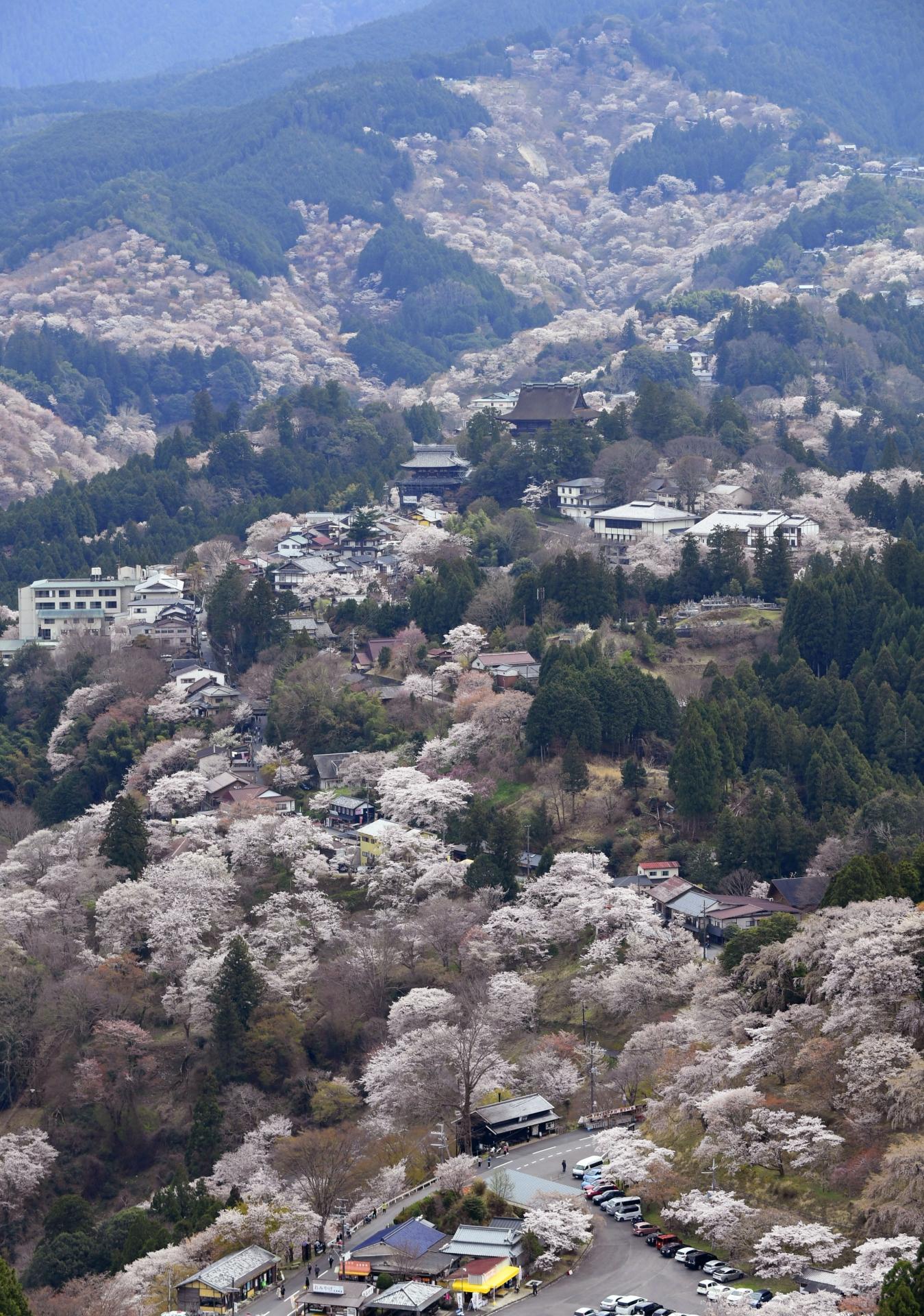 3372372_m 奈良県  吉野山(山が桜に染まる春におすすめの絶景スポット! 写真の紹介、アクセス情報や駐車場情報など)