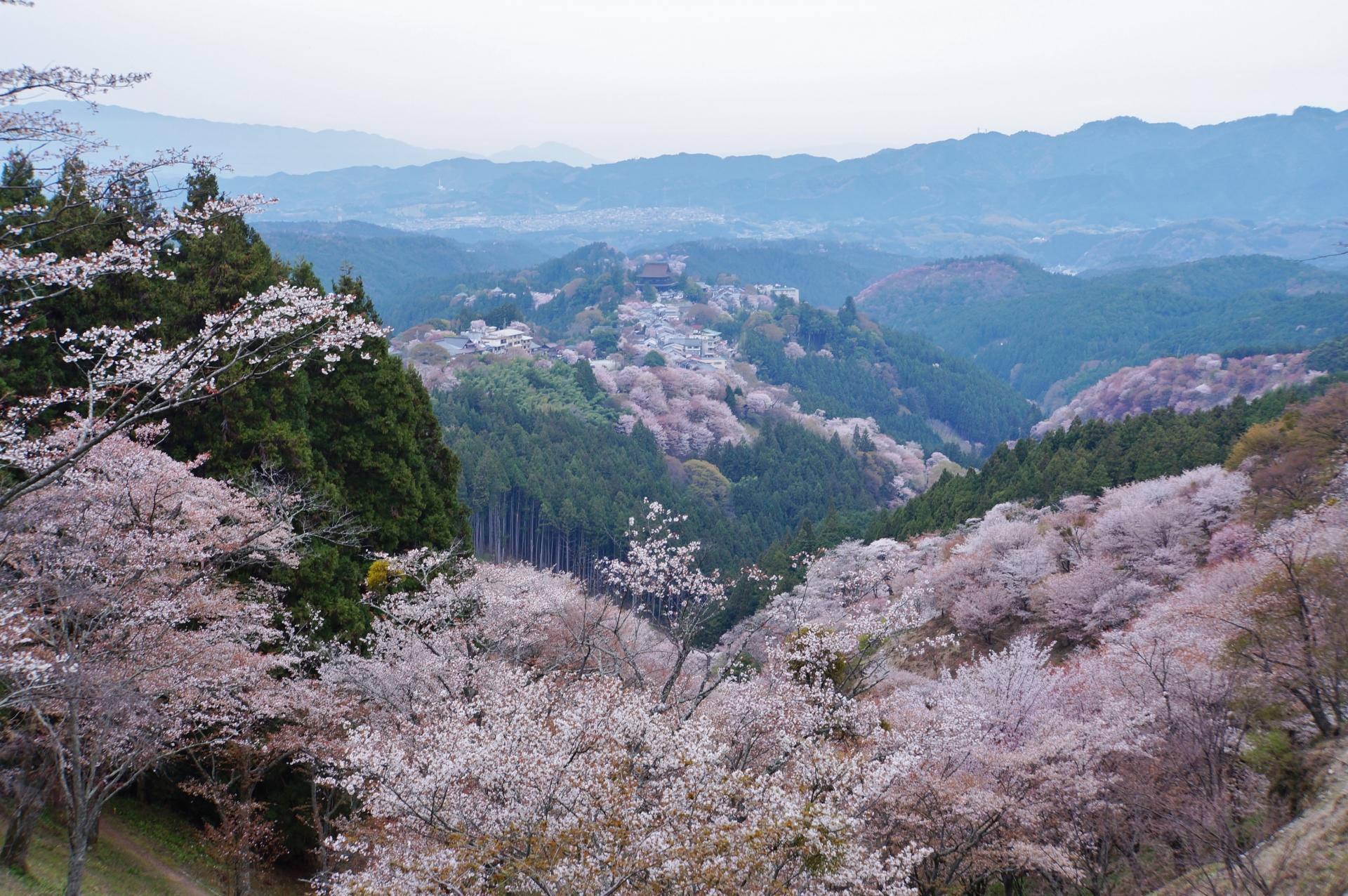 889174_m 奈良県  吉野山(山が桜に染まる春におすすめの絶景スポット! 写真の紹介、アクセス情報や駐車場情報など)