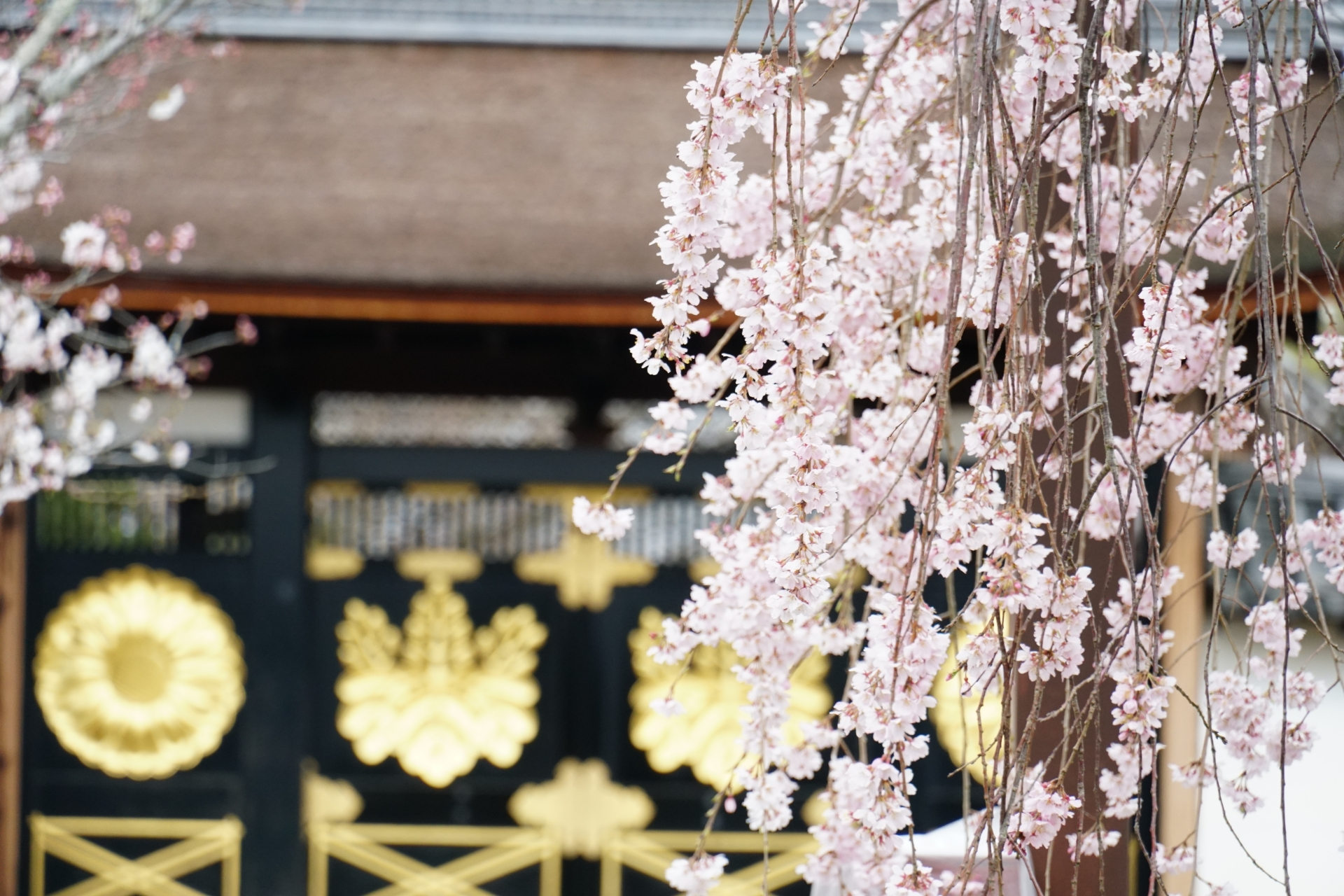 2369295_m 京都府 醍醐寺(花の醍醐と呼ばれる桜の景色が美しい春におすすめ写真スポット! 撮影した写真の紹介、アクセス情報など)