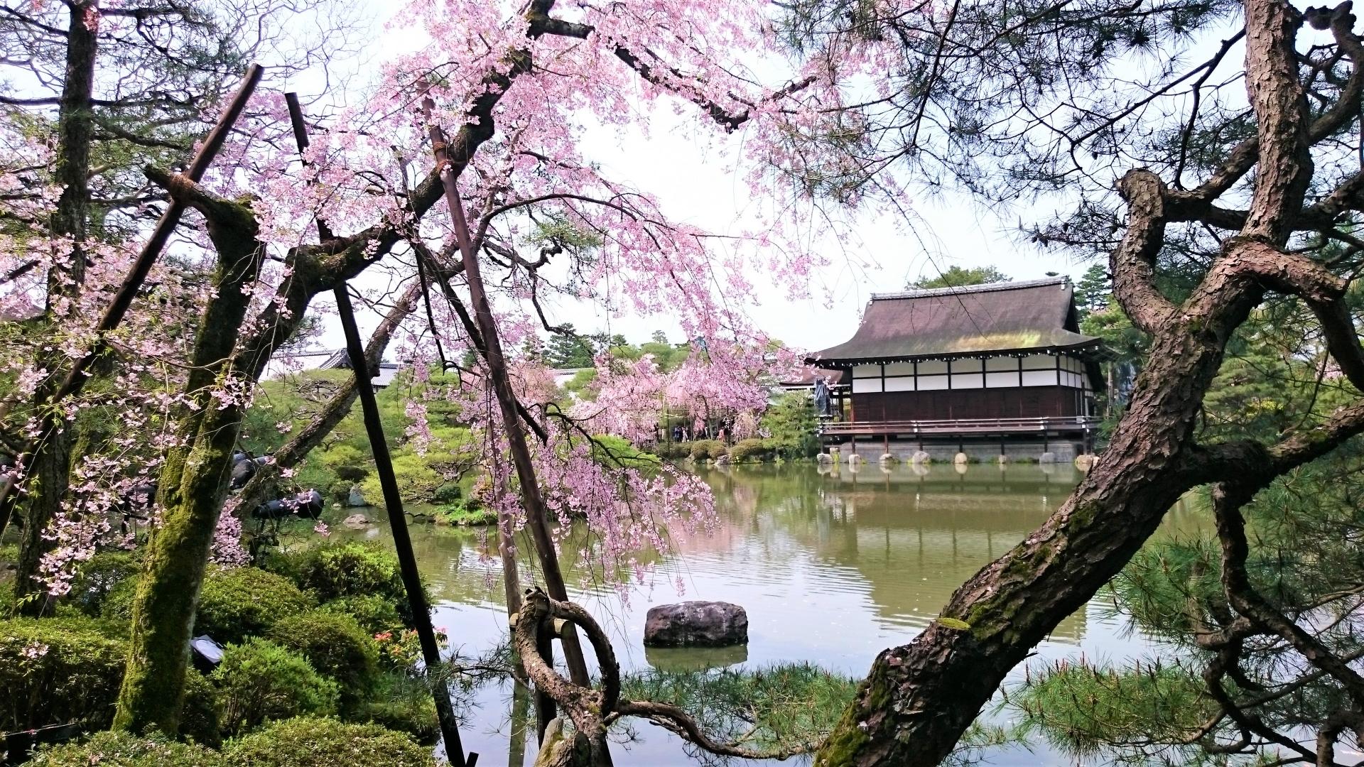 2619813_m 京都府 平安神宮(水面に映る桜の景色が美しい春におすすめ桜写真スポット! 撮影した写真の紹介、アクセス情報など)