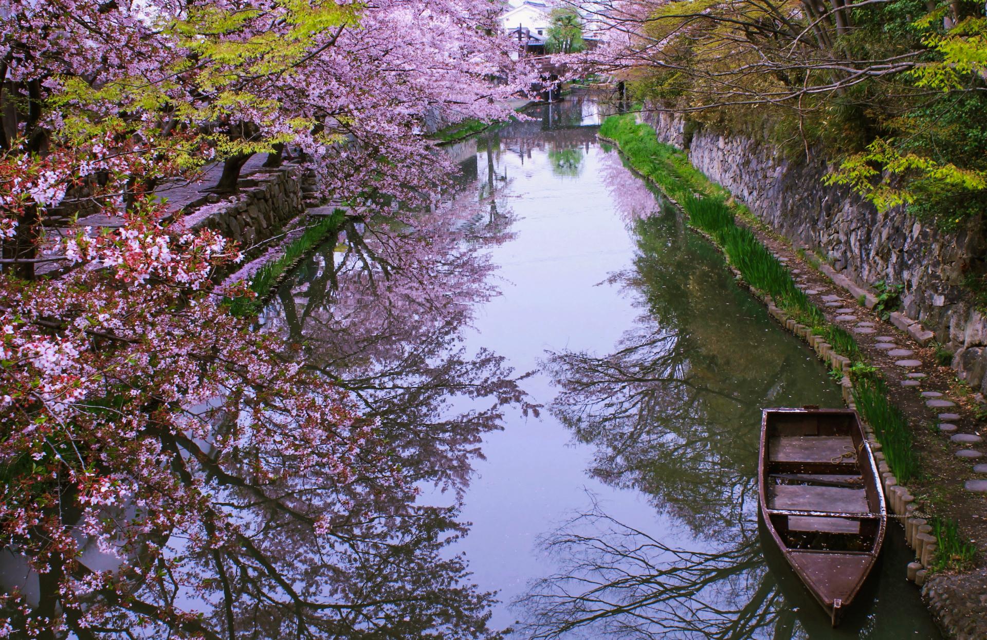 2641250_m 滋賀県  近江八幡 八幡堀(桜と和舟の景色に日本の風情を感じる春におすすめの桜スポット! 写真の紹介、アクセス情報や駐車場情報など)