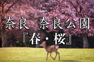 2f7948312d0fc0242139ae18f2ae1f1d-300x200 奈良公園