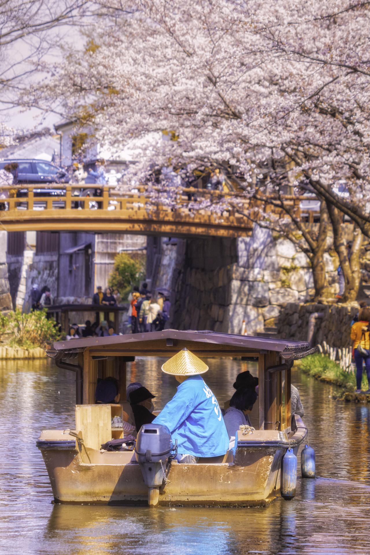 3302159_m 滋賀県  近江八幡 八幡堀(桜と和舟の景色に日本の風情を感じる春におすすめの桜スポット! 写真の紹介、アクセス情報や駐車場情報など)