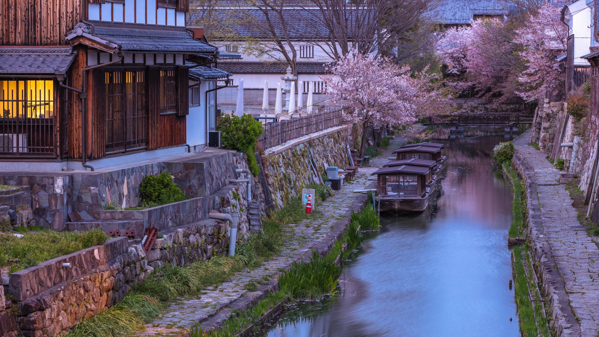3900221_m 滋賀県  近江八幡 八幡堀(桜と和舟の景色に日本の風情を感じる春におすすめの桜スポット! 写真の紹介、アクセス情報や駐車場情報など)